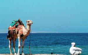 Ловушки туриндустрии Египта