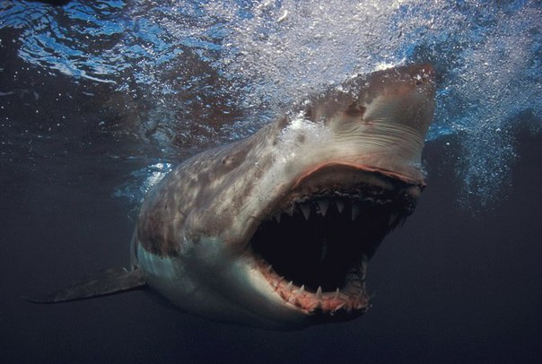 нападений акул на человека