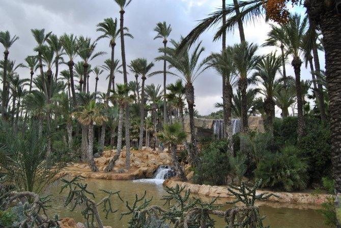 Пальмовый лес Эльче