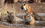 Достопримечательности Индии — Национальный парк Канха