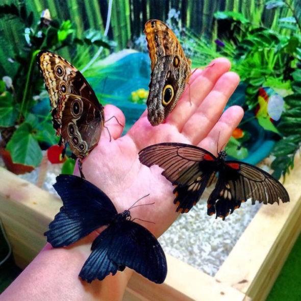 Таиланд/Саттахип/Парк бабочек