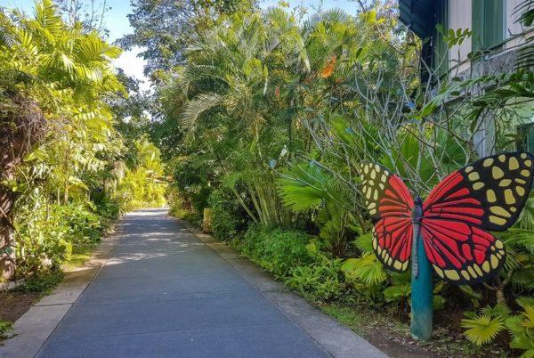 Парк бабочек Саттахип